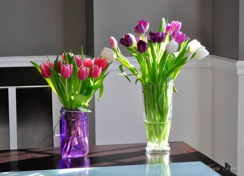 Mê mẩn tài cắm hoa Tulip của mẹ bầu Việt ở Mỹ