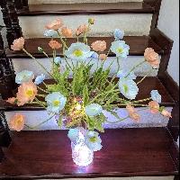 Lọ hoa anh túc Nàng Tiên Nâu