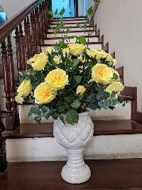Bình hoa hồng David Sunshine vàng 01