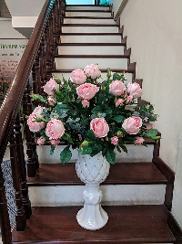 Chậu hoa hồng Như Ý 03