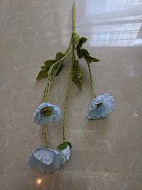 Cụm hoa anh túc xanh 03