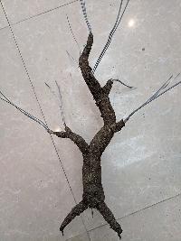 Gốc cây bonsai cỡ trung bình 02
