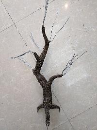 Gốc cây bonsai cỡ trung bình 03